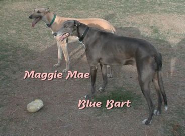 Maggie and Blue